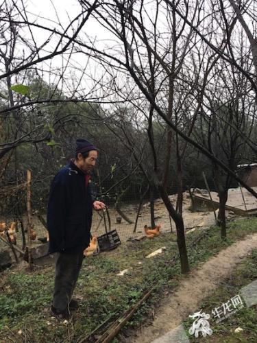 村民李登固在民宿附近散养了接近200只土鸡,一年增收4000多元。首席记者 佘振芳 摄