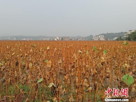 煜文农业种养殖基地达4000余亩。 王昊昊 摄
