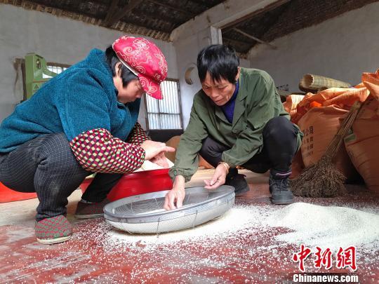 工作人员人工筛选稻米。 王昊昊 摄