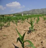 河北:农作物受旱面积达1190万亩