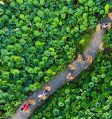 广西柳州:打造美丽荷塘 助力乡村脱贫